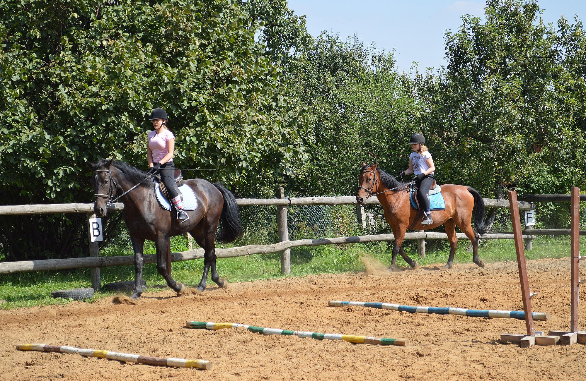 konie_12